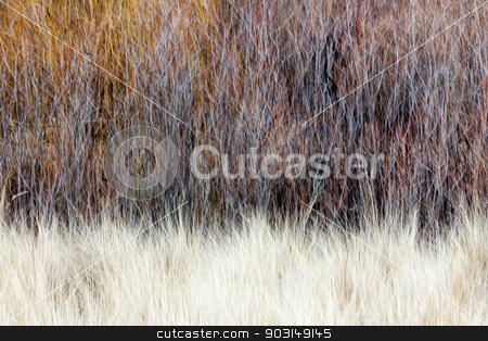 Blurred brown winter woodland background stock photo, Nature landscape of bare trees and grasses with in-camera vertical motion blur by Elena Elisseeva