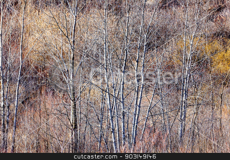 Brown winter forest with bare trees stock photo, Nature landscape of brown winter woodland with bare trees and dry grasses by Elena Elisseeva
