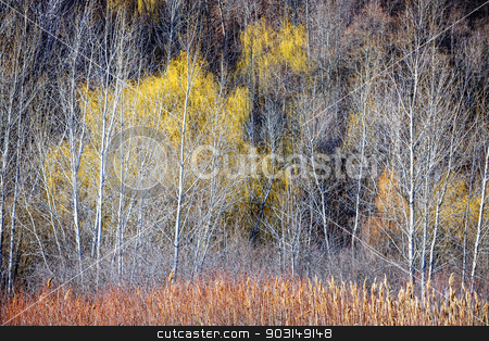 Winter forest landscape with bare trees stock photo, Nature landscape of leafless bare trees and dry grasses in winter ravine by Elena Elisseeva