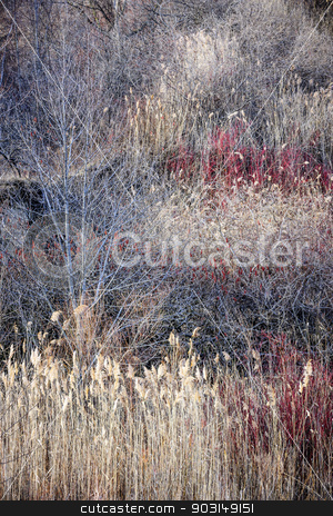 Dry grasses and bare trees in winter forest stock photo, Natural background of dry grasses and bare trees in brown winter woodland with subdued colors by Elena Elisseeva