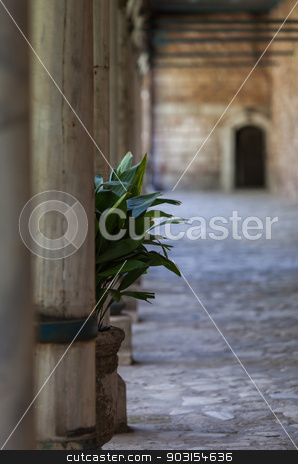 Plant at Topkapi Palace stock photo, Plant in Corridor at Topkapi Palace by Scott Griessel