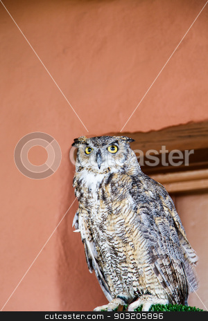 Owl on Perch by Adobe Wall stock photo, A great horned owl on a perch by a red adobe wall by Darryl Brooks