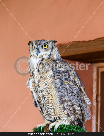 Horned Owl by Adobe Wall stock photo, A great horned owl on a perch by a red adobe wall by Darryl Brooks