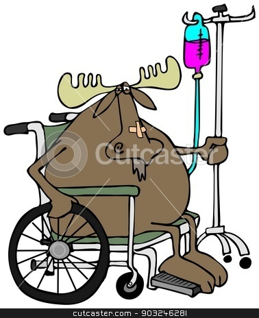 Moose in a wheelchair stock photo, This illustration depicts a moose sitting in a wheelchair with an IV stand in the back. by Dennis Cox