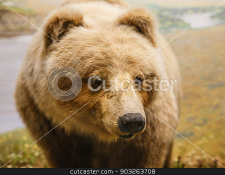 Kodiak Bear by River stock photo, A brown kodiak bear by a river by Darryl Brooks