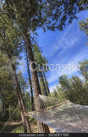 Peaceful Hammock Hanging Among the Pine Trees stock photo, Peaceful Hammock Hanging Among the Pine Trees in a Mountian Retreat. by Andy Dean