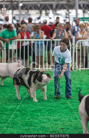 Teen with pigs at Iowa State Fair stock photo, DES MOINES, IA /USA - AUGUST 10: Unidentified teen exercising and showing swine at Iowa State Fair on August 10, 2014 in Des Moines, Iowa, USA. by Scott Griessel
