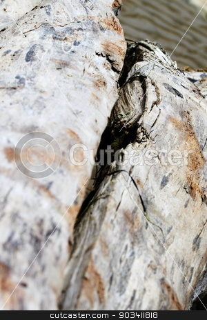 Driftwood stock photo, Close up of old driftwood lying on the beach. by Henrik Lehnerer