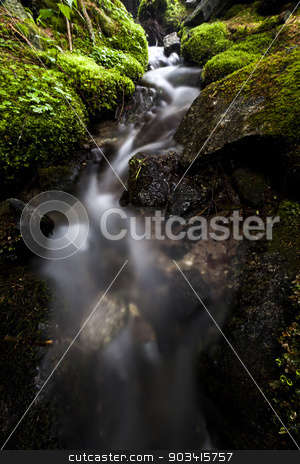 Forest river stock photo, Water in motion while flowing in the forest river between moss  by Dario Rota