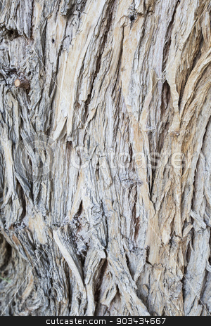 Aged Wood Texture on Old Tree stock photo, Aged Wood Texture on Old Tree Background Abstract. by Andy Dean