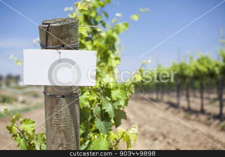 Grape Wine Vineyard with Wooden Post Holding Blank Sign stock photo, Grape Wine Vineyard with Wooden Post Holding Blank Sign Ready for Your Own Text. by Andy Dean