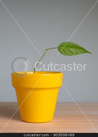 Plant with one leaf stock photo, young plant with one leaf in clay pot  by Pablo Caridad