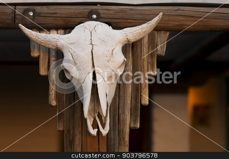 Cow Skull on Porch stock photo, Aged cow skull hanging on wooden post by Scott Griessel
