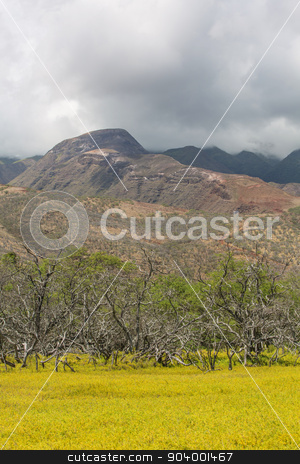 Molokai Clouds Over Mountain stock photo, Cloudy mountain on Molokai with Field in foreground by Scott Griessel
