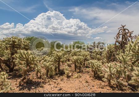 Cactus Shrubs in Wilderness stock photo, Desert wilderness with cactus plants in Arizona by Scott Griessel