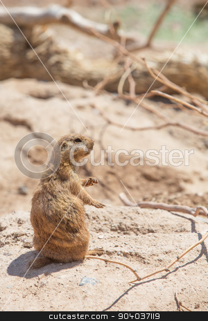 Cute Prairie Dog Near Hole stock photo, Single cute prairie dog standing near hole in ground by Scott Griessel