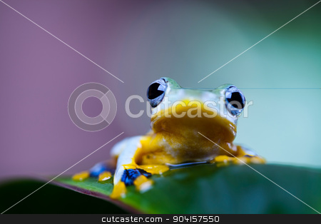 Flying Frog in the jungle on colorful background stock photo, Flying Frog in the jungle on colorful background by Sebastian Duda