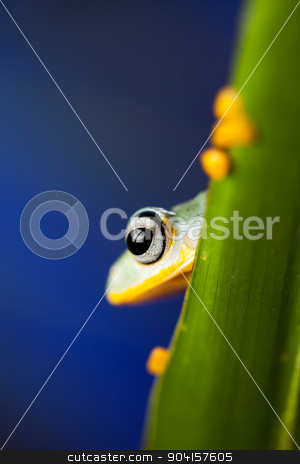 Frog on the leaf on colorful background stock photo, Frog on the leaf on colorful background by Sebastian Duda