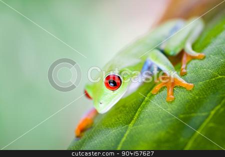 Red eye tree frog on leaf on colorful background stock photo, Red eye tree frog on leaf on colorful background by Sebastian Duda