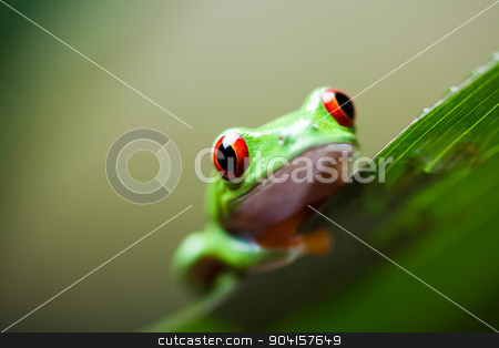 Frog in the jungle on colorful background stock photo, Frog in the jungle on colorful background by Sebastian Duda