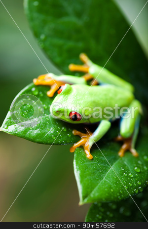 Green tree frog on colorful background stock photo, Green tree frog on colorful background by Sebastian Duda