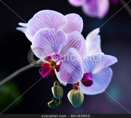 Orchids, fresh and organic concept stock photo, Orchids, fresh and organic concept by Sebastian Duda