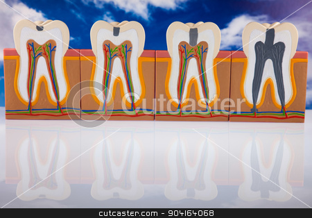 Human tooth structure, bright colorful tone concept stock photo, Human tooth structure, bright colorful tone concept by Sebastian Duda