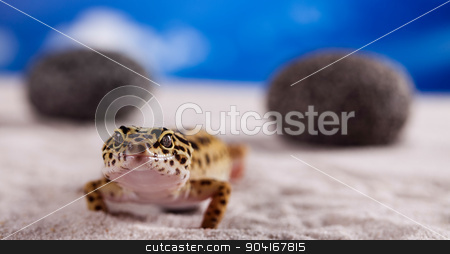 Gecko, bright colorful vivid theme stock photo, Gecko, bright colorful vivid theme by Sebastian Duda