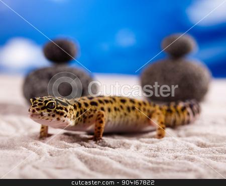 Gecko, bright colorful vivid theme stock photo, Gecko, bright colorful vivid theme by Sebastian Duda