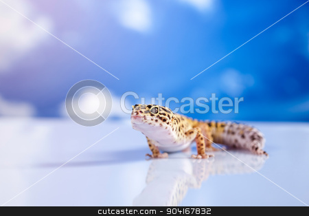Young Leopard gecko a white background stock photo, Young Leopard gecko a white background by Sebastian Duda