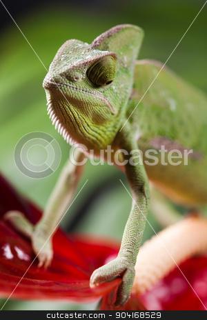 Flower on chameleon, bright vivid exotic climate stock photo, Flower on chameleon, bright vivid exotic climate by Sebastian Duda