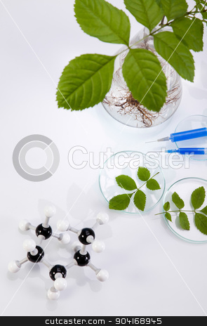 Chemistry equipment, plants laboratory experimental stock photo, Chemistry equipment, plants laboratory experimental by Sebastian Duda