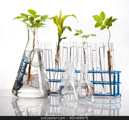 Science experiment with plant laboratory stock photo, Science experiment with plant laboratory by Sebastian Duda