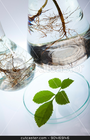 Chemical laboratory glassware, bio organic modern concept stock photo, Chemical laboratory glassware, bio organic modern concept by Sebastian Duda