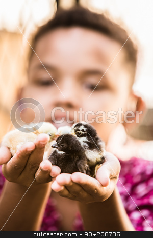Girl Holding Pet Chicks stock photo, Single smiling girls holds his pet chicks by Scott Griessel