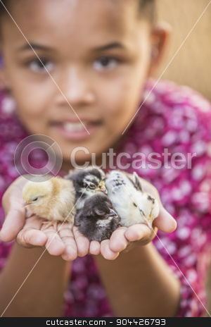 Pretty Young Girl wiht Chicks stock photo, Pretty young mixed race girl holding baby chickens by Scott Griessel
