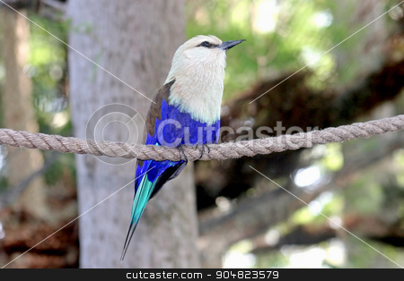 Bird stock photo, A bird with white and blue feathers perched on a rope by Lucy Clark