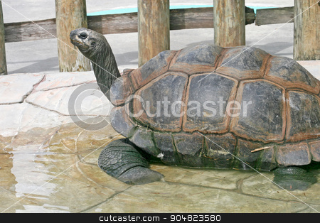 Tortoise stock photo, A large tortoise sitting on tile with water by Lucy Clark