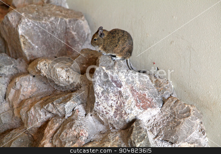 Mongolian Gerbil stock photo, A Mongolian gerbil sitting on some rocks by Lucy Clark