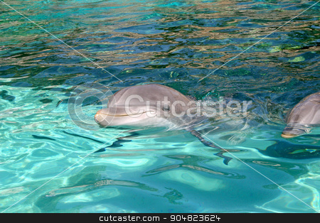 Dolphin stock photo, A dolphin is swimming through the water by Lucy Clark