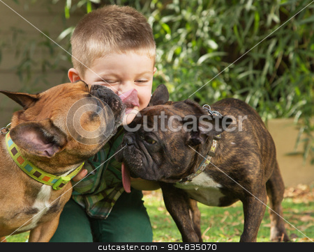 Dogs Licking a Little Boy stock photo, Two bulldogs licking little boy sitting outdoors by Scott Griessel