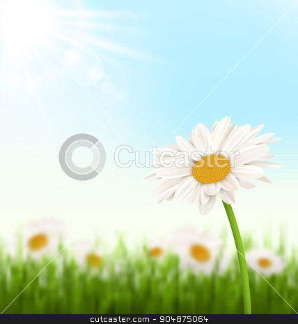 Green grass lawn with white chamomiles flowers and sunlight on s