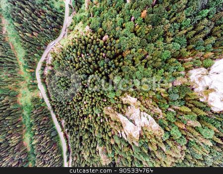 Road in coniferous forest, rocky hills. Mala Fatra, Slovakia