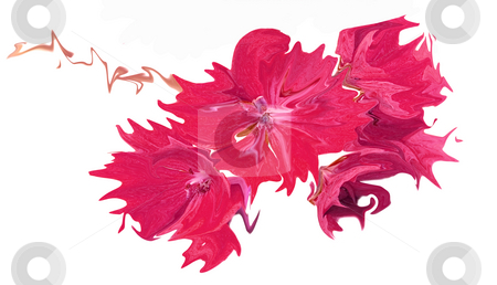 Abstract pink flower stock photo, Abstract pink flower illustration by John Teeter