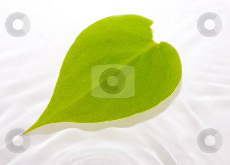 Leaf floating in water stock photo, Leaf floating in water with ripple waves by John Teeter