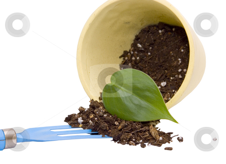 Leaf in pot stock photo, Leaf in pot by John Teeter