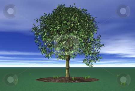 3D Lone Tree stock photo, 3D Lone Tree with sky and grass by John Teeter