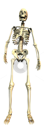 3D Skeleton isolated stock photo, 3D Skeleton isolated by John Teeter