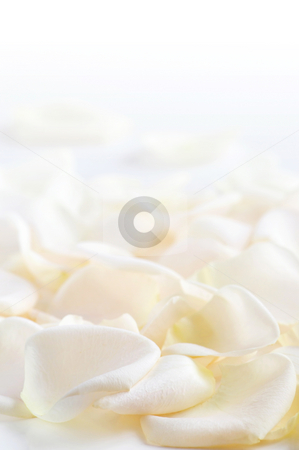 Rose petals stock photo, Abstract background of fresh white rose petals by Elena Elisseeva