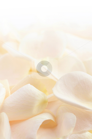 Rose petals stock photo, Abstract background of a fresh beige rose petals by Elena Elisseeva